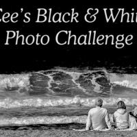 Cee's Black & White Photo Challenge CB&W #Photography #Birds