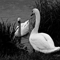 Cee's Black and White Photo Challenge #Photography #Birds