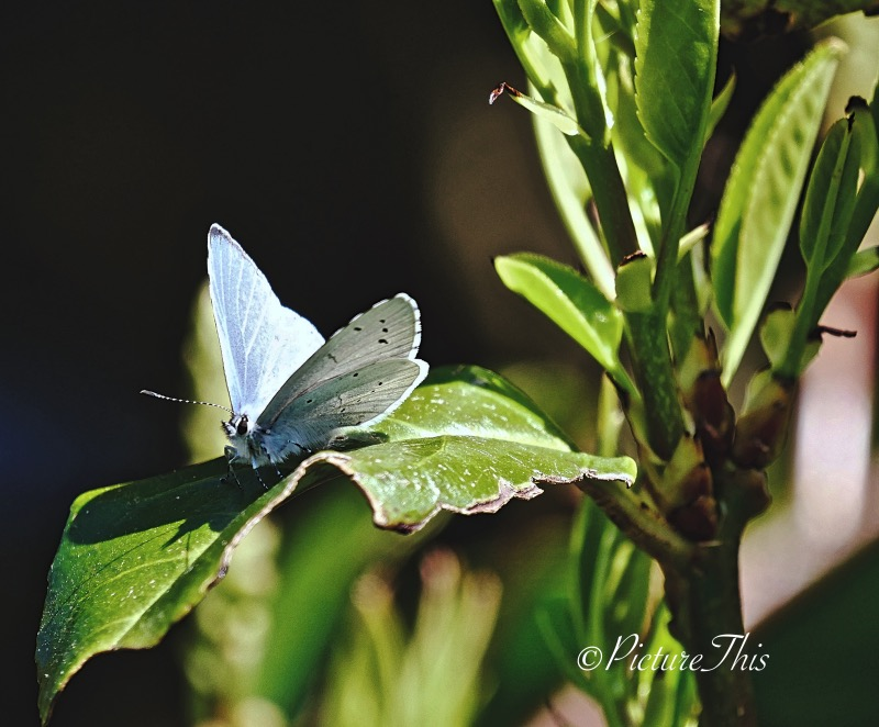 Small blue butterfly on green leaves