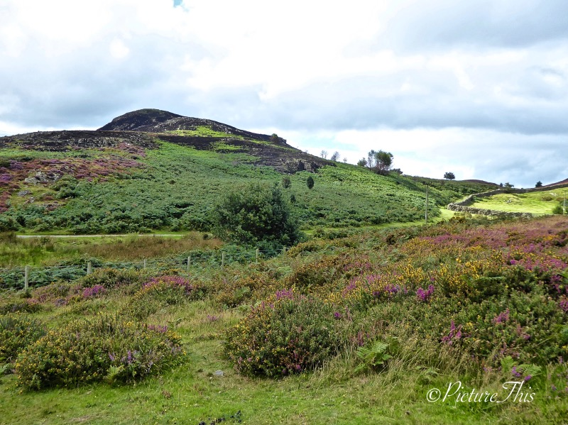 Mountain path walk with colourful heather