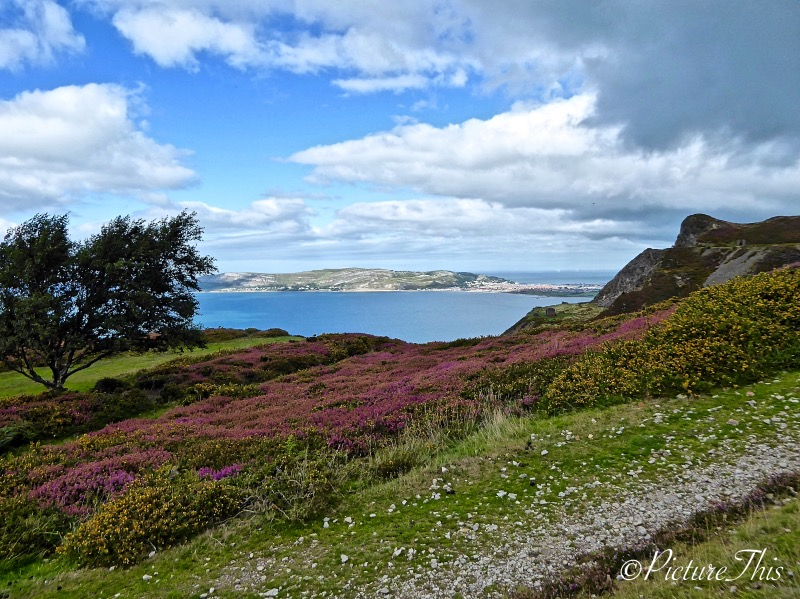 Sea view with trees and heather