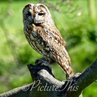 #WordlessWednesday ~ Owls #Nature #Photography