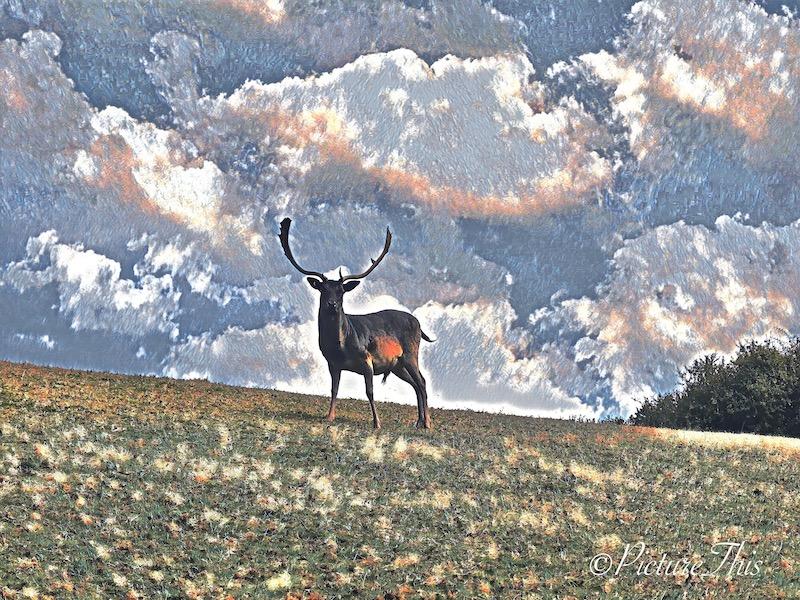 Digital Art wildlife, flowers, scenery