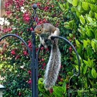 #FridayFun ~ A Determined Squirrel #Nature #Wildlife #Photography