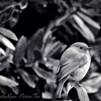 #BirdWeekly ~ Photo Challenge ~ Black & White #Photography #Birds #Nature