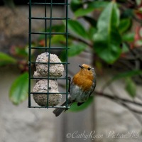 #BirdWeekly Challenge ~ Birds at the Feeder #Nature #Birds #Photography