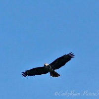 #BirdWeekly Challenge ~ Birds of Prey #Photography #Nature #Raptors