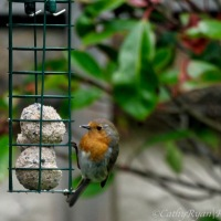 #BirdWeekly ~ Birds in the Garden #birds #nature #photography