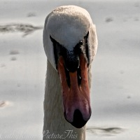 #BirdWeekly ~ Macro or Close ups #Birds #Nature #Photography #Wildlife