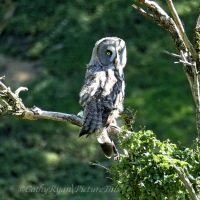 #BirdWeekly ~ Owls #raptors #nature #photography #wildlife #owls