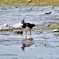 #BirdWeekly ~ Long Legged Birds #Nature #Wildlife #Photography