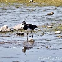#BirdWeekly ~ Long Legged Birds #Nature #Wildlife #Photography