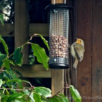 #SundayStills ~  Birds Feeding in the Garden #naturePhotography #GardenBirds