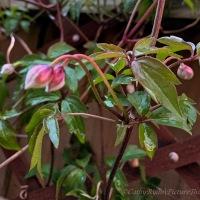 #SundayStills ~ Spring Emerging #NaturePhotography