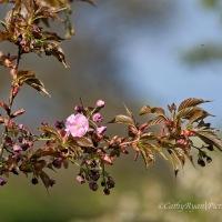 #SundayStills ~ So many shades of #pink in #nature