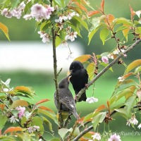 #BirdWeekly ~ Birds We See All The Time #NaturePhotography #Birds