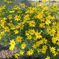 #SundayStills ~ In My Garden #Nature #Photography